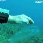 Diver encounters 'ghostly fish' that is almost fully transparent