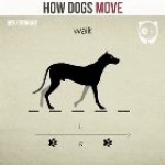 How Dogs Move