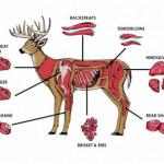 Deer-meat-chart