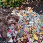 Penny hasn't been alive for every season yet but so far fall is her favorite. She luvs the crunchy leafies