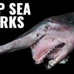 Why creatures get creepier the deeper you go!