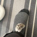 Hamster on foot