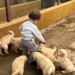 Puppies cute attack