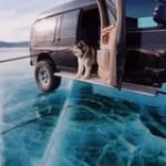 Husky scared of frozen Lake Baikal in Southern Siberia, Russia