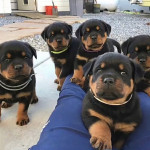The awesome puppies