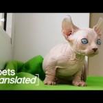 Talkative Kittens