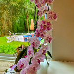 Beautiful orchid in bloom