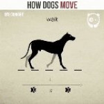 This neat demonstration of different canine gaits