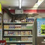 'Godzilla goes shopping': A massive monitor lizard causes havoc inside a Thai supermarket and is filmed scaling shelves