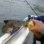 What are you suppose to do when a fish jumps out of water and asks you for a sip of beer?