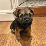 Grumpy puppy 😁