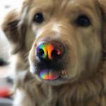 Rainbow blep