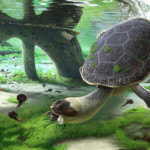 New species of prehistoric turtle discovered in Madagascar