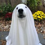 AM GHOST 👻