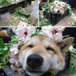 This flower shop has a flower assistant who just needed to take a break in the bed of flowers