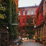 Autumn colors in Vienna