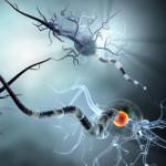 How COVID-19 Worms Its Way Into the Brain – Explaining Baffling Neurological Symptoms