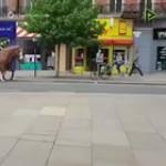 Horses hate rainbows, huh?