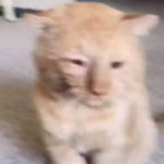 Adopting an old cat