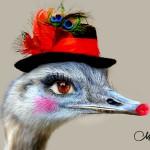 Lady Ostrich
