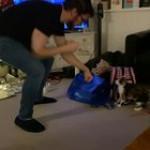 Boxing cat