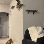 The cat is still observing the bulldog
