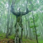 A tree in the Balkan mountains, Bulgaria