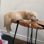 Cute planking