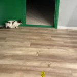 Cat scares the hell out of the puppy