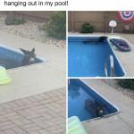 Donkey Pool Time
