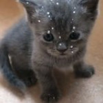 Kitty rudely splashes sibling's face with milk