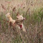 Frolicking through fields at full derp