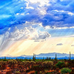 After drought, comes the sweet rain. {Sonoran Desert}