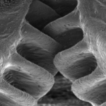 The Issus Coleoptratus, an insect, has gears that help it jump. These are the only naturally occurring gears in the animal kingdom