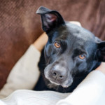 People with COVID Often Infect Their Pets