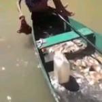 Catching Piranhas
