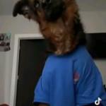 A dog wearing a shirt