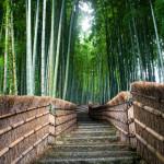 Arashiyama (Kyoto, Japan) bamboo grove up to graveyard