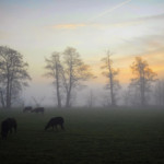 All peace and quiet at this foggy morning. Almelo, The Netherlands