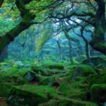 Sherwood Forest, Nottingham England