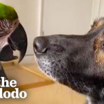 Dog and parrot who didn't get along spend every single moment together now