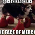Boxer Hound, the Destroyer of mercy