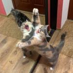 Cat being a derp