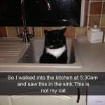 Jim, The Dark Sink Haunter