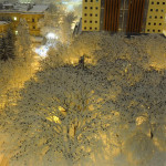 Thousands of crows photographed atop snow-laden trees