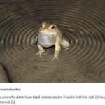 Banshee Toad, the seas shiver at its presence