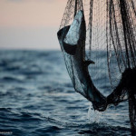 Illegal driftnet use widespread in Indian Ocean, Greenpeace says