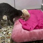 Cat has become the new owner of this pup