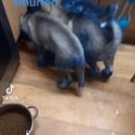 Huskies do some remodeling