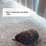 Peter the Hedgehog